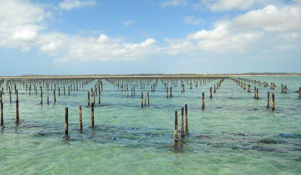 Traitement de l'eau : la solution naturelle Water Cleanser